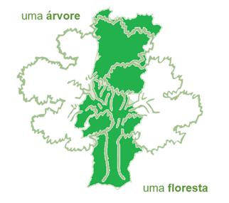 """1.º lugar do Concurso Nacional """"Uma árvore, uma floresta"""""""